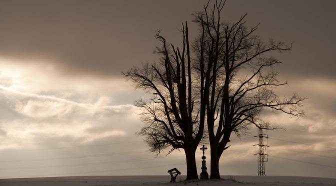 Stromy a město 2.část