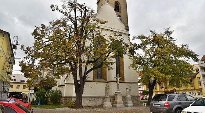ČIŽP: Město Soběslav musí odložit kácení lip na náměstí